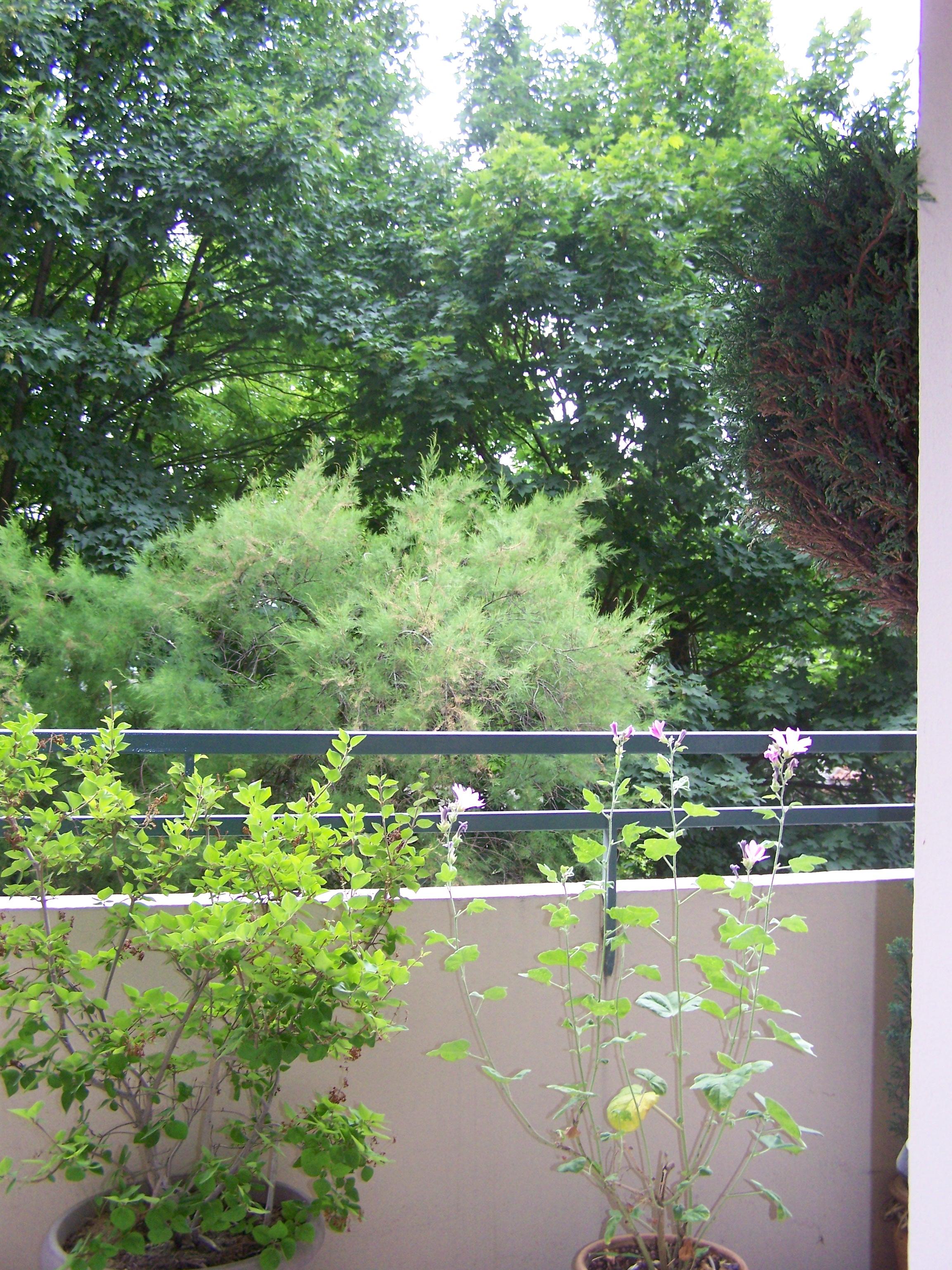 balcon210003.jpg